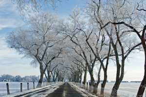 Frost Covered Lane