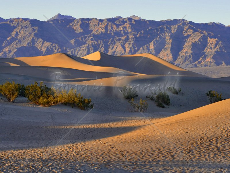 Mesquite Flat Sand Dunes - Click Image to Close