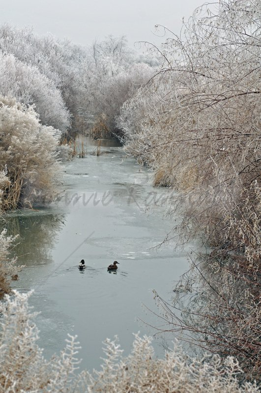Frosty Stream - Click Image to Close